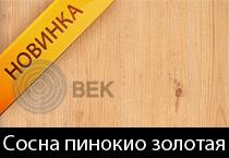 sosna-pinokio-gold-s